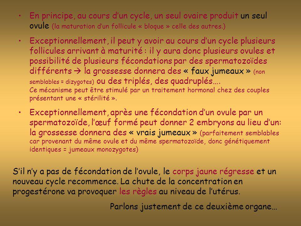 En principe, au cours d'un cycle, un seul ovaire produit un seul ovule (la maturation d'un follicule « bloque » celle des autres.)