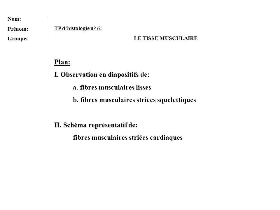 I. Observation en diapositifs de: a. fibres musculaires lisses