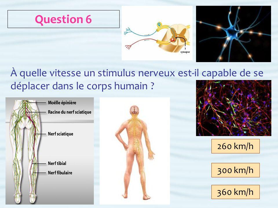 Question 6 À quelle vitesse un stimulus nerveux est-il capable de se déplacer dans le corps humain