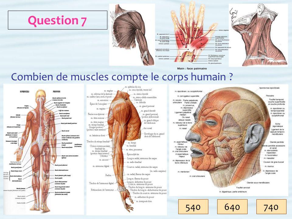 Question 7 Combien de muscles compte le corps humain 540 640 740