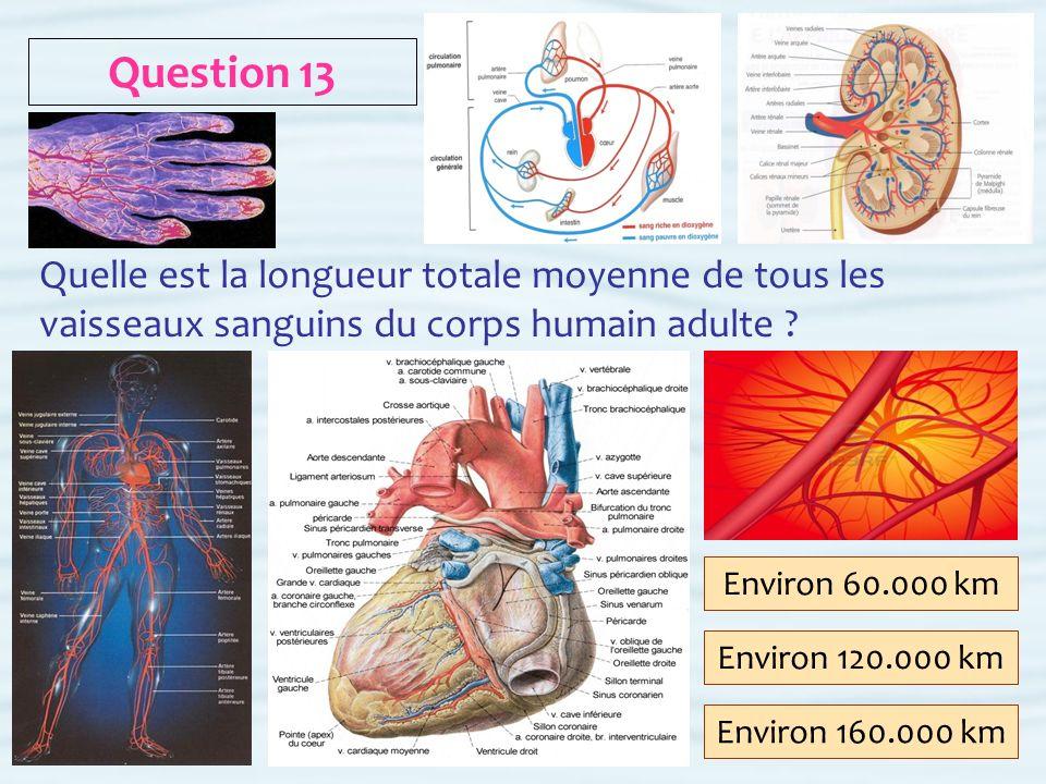 Question 13 Quelle est la longueur totale moyenne de tous les vaisseaux sanguins du corps humain adulte