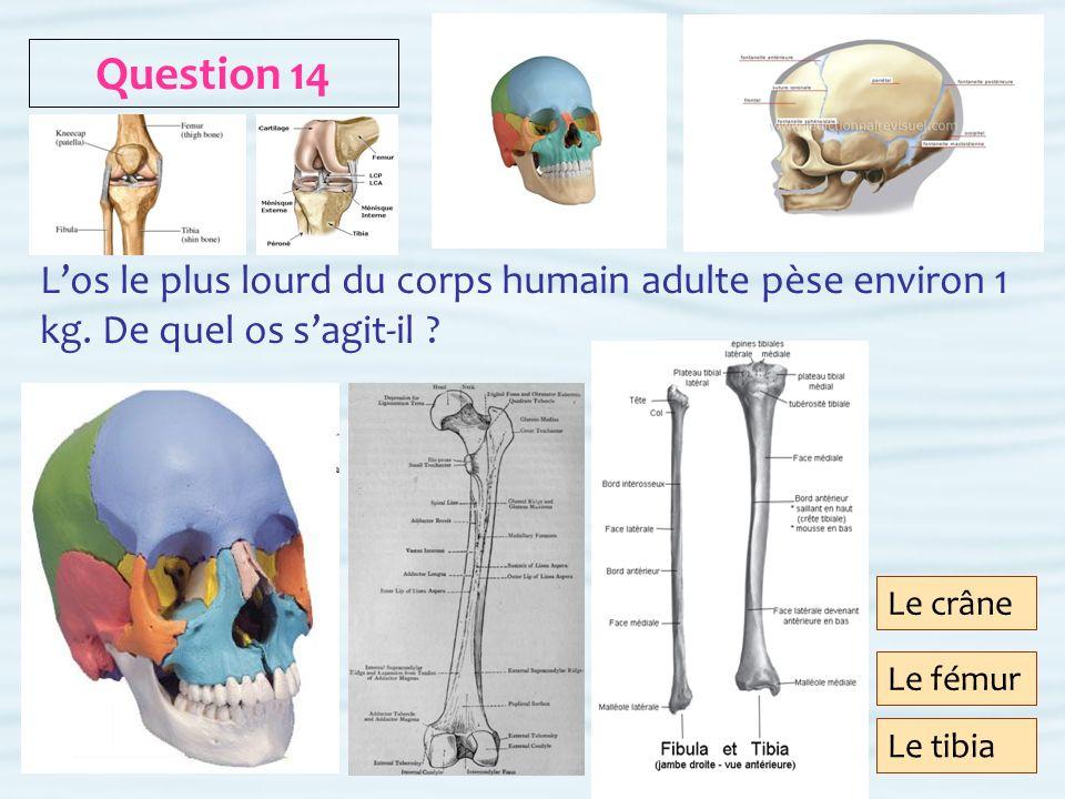 Question 14 L'os le plus lourd du corps humain adulte pèse environ 1 kg. De quel os s'agit-il Le crâne.
