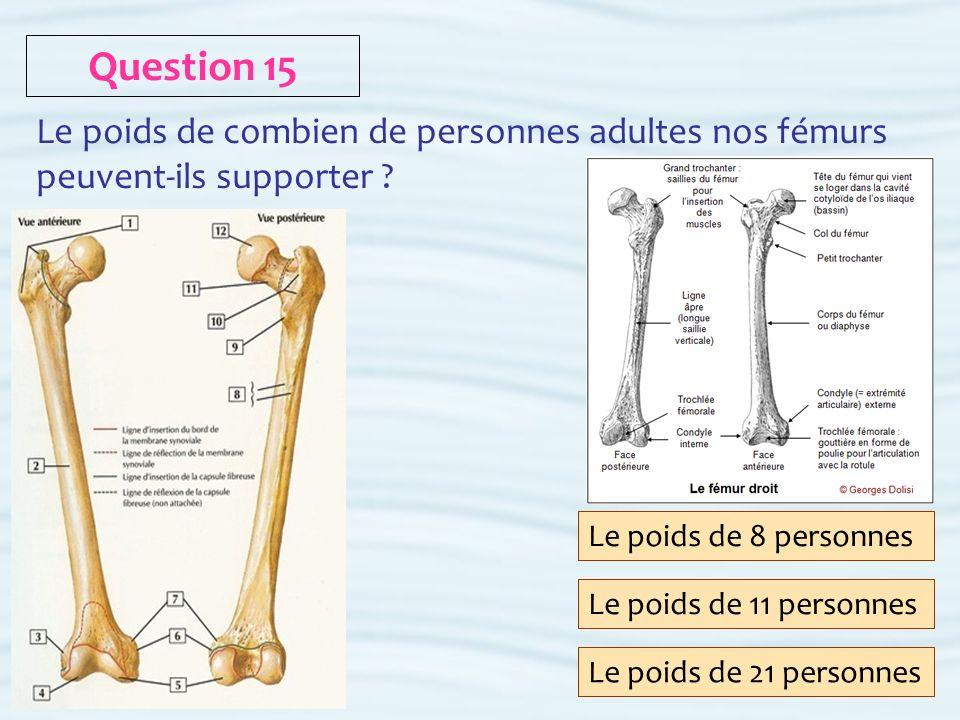 Question 15 Le poids de combien de personnes adultes nos fémurs peuvent-ils supporter Le poids de 8 personnes.