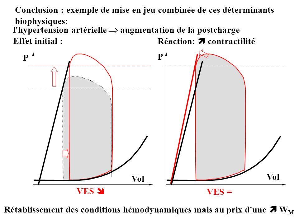 Conclusion : exemple de mise en jeu combinée de ces déterminants biophysiques: