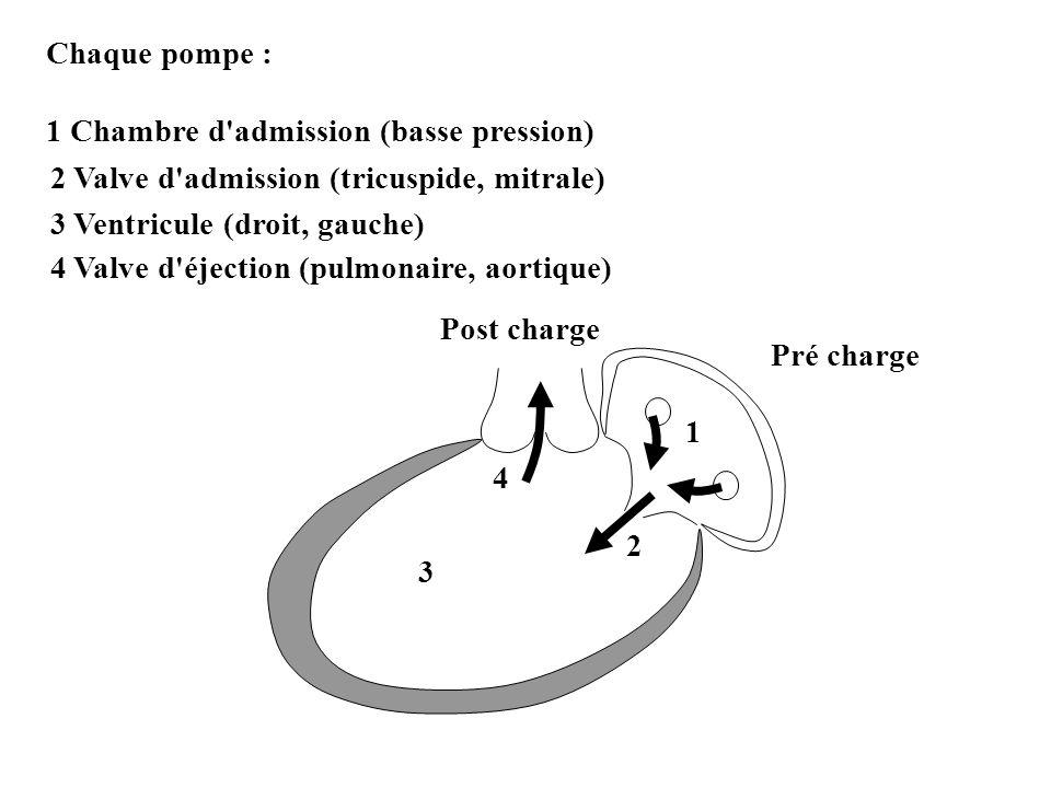 Chaque pompe : 1 Chambre d admission (basse pression) 2. 2 Valve d admission (tricuspide, mitrale)
