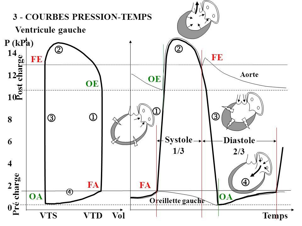        3 - COURBES PRESSION-TEMPS Ventricule gauche P (kPa) 14