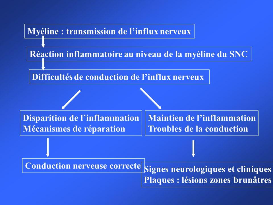Myéline : transmission de l'influx nerveux