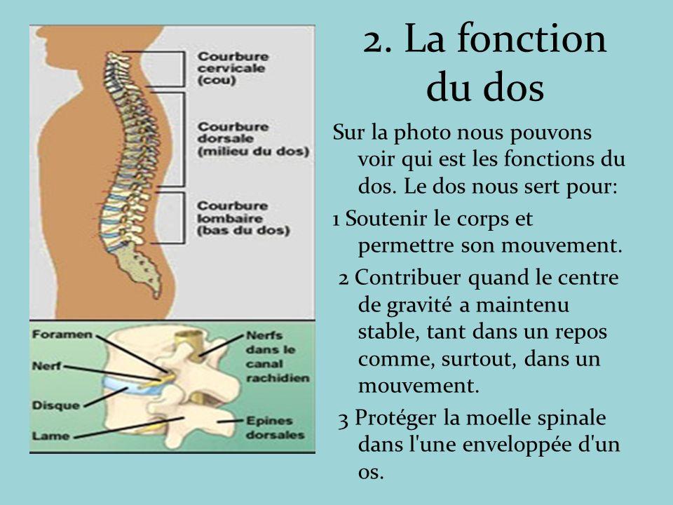 2. La fonction du dos Sur la photo nous pouvons voir qui est les fonctions du dos. Le dos nous sert pour: