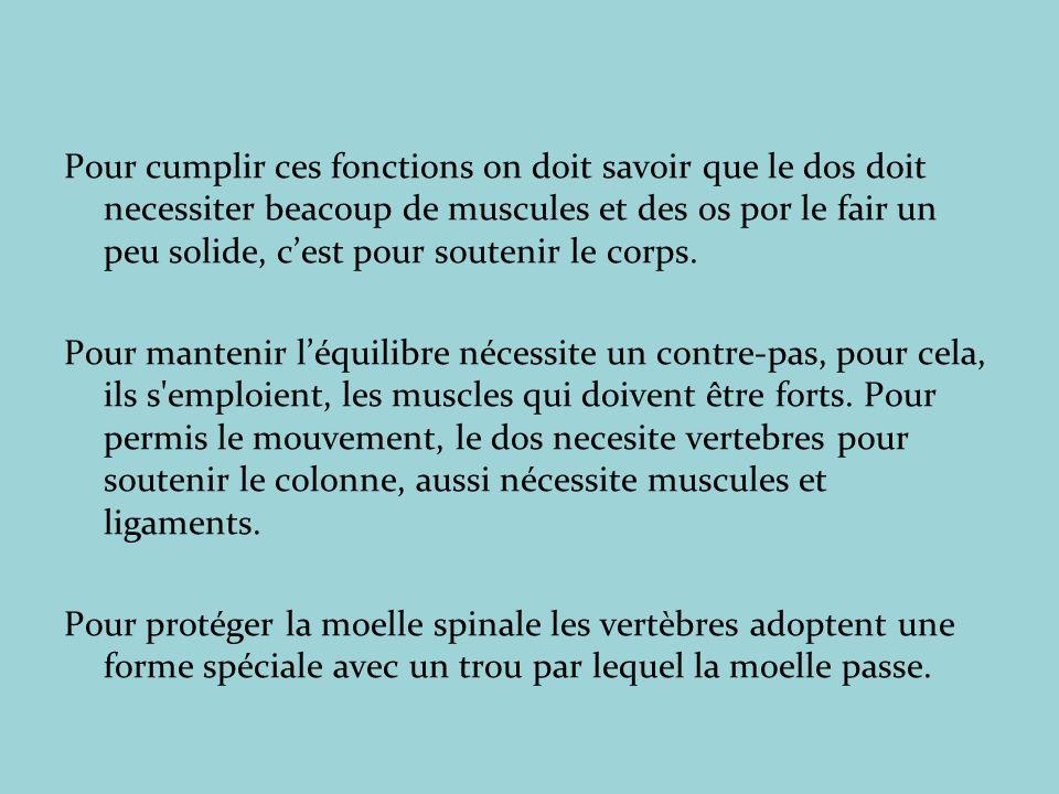 Pour cumplir ces fonctions on doit savoir que le dos doit necessiter beacoup de muscules et des os por le fair un peu solide, c'est pour soutenir le corps.