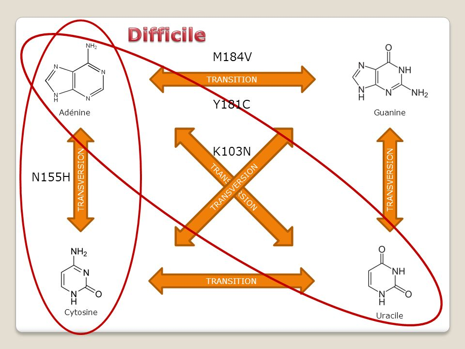 Difficile M184V Y181C K103N N155H Adénine Guanine TRANSITION