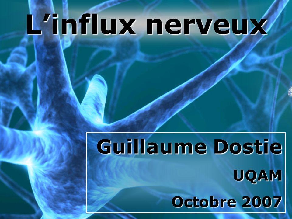L'influx nerveux Guillaume Dostie UQAM Octobre 2007