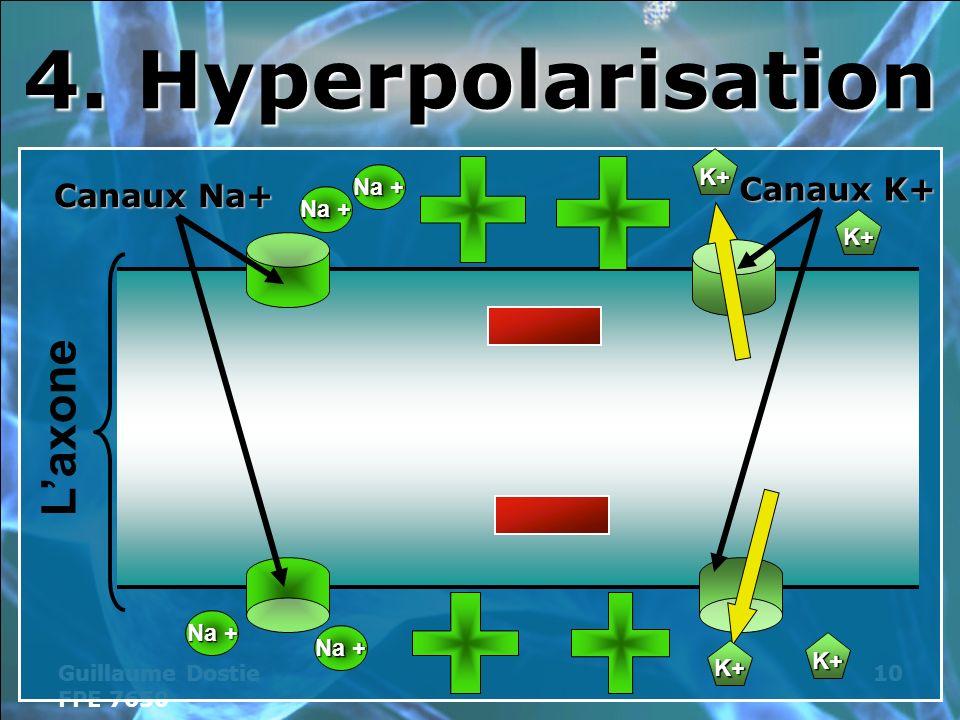 4. Hyperpolarisation L'axone Canaux K+ Canaux Na+ K+ Na + Na + K+ Na +