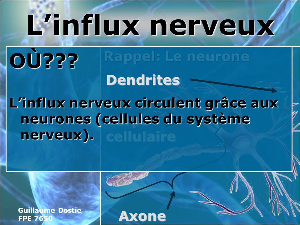 L'influx nerveux OÙ Rappel: Le neurone
