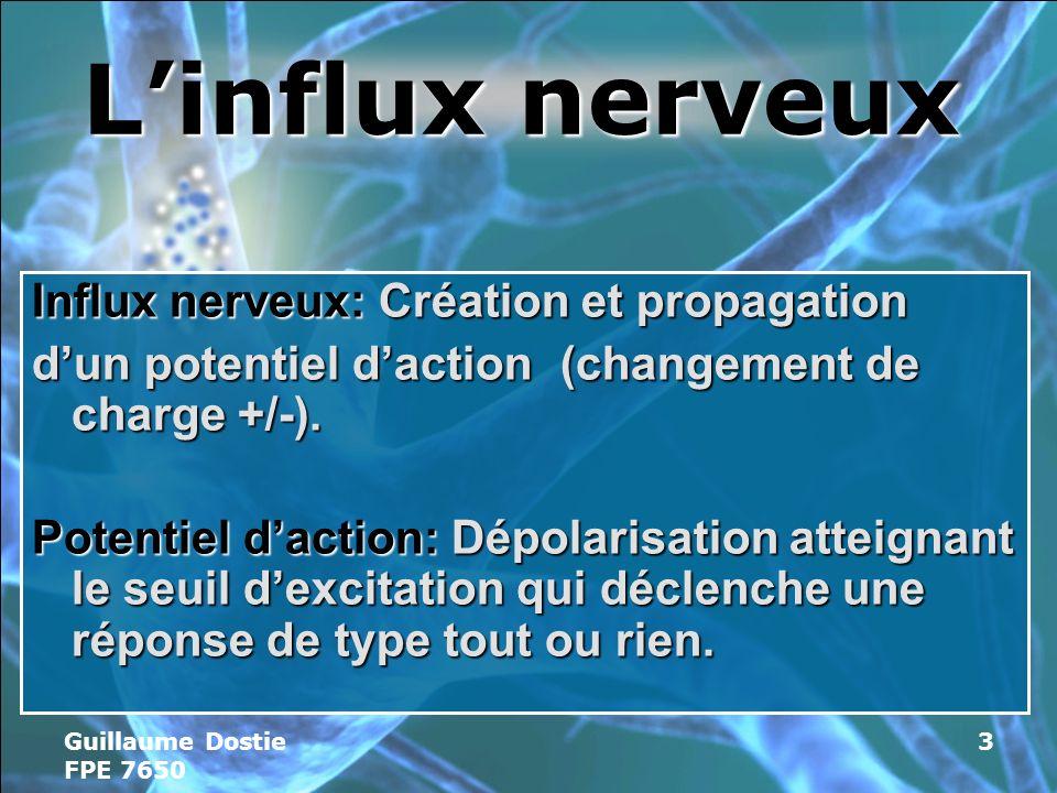 L'influx nerveux Influx nerveux: Création et propagation