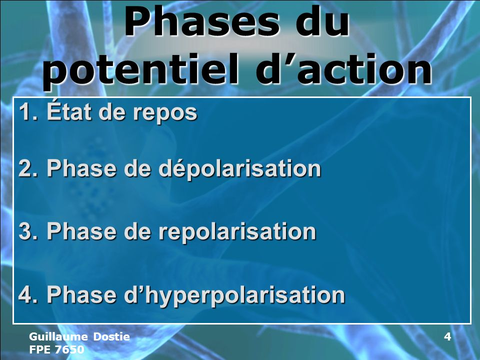 Phases du potentiel d'action