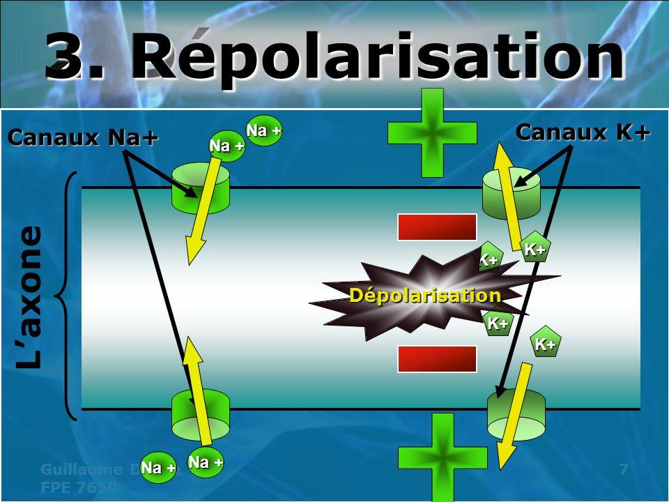3. Repolarisation 2. Dépolarisation
