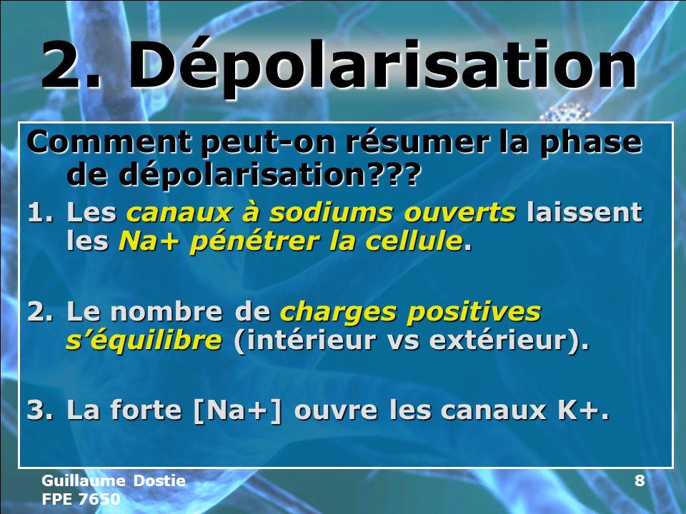 2. Dépolarisation Comment peut-on résumer la phase de dépolarisation Les canaux à sodiums ouverts laissent les Na+ pénétrer la cellule.