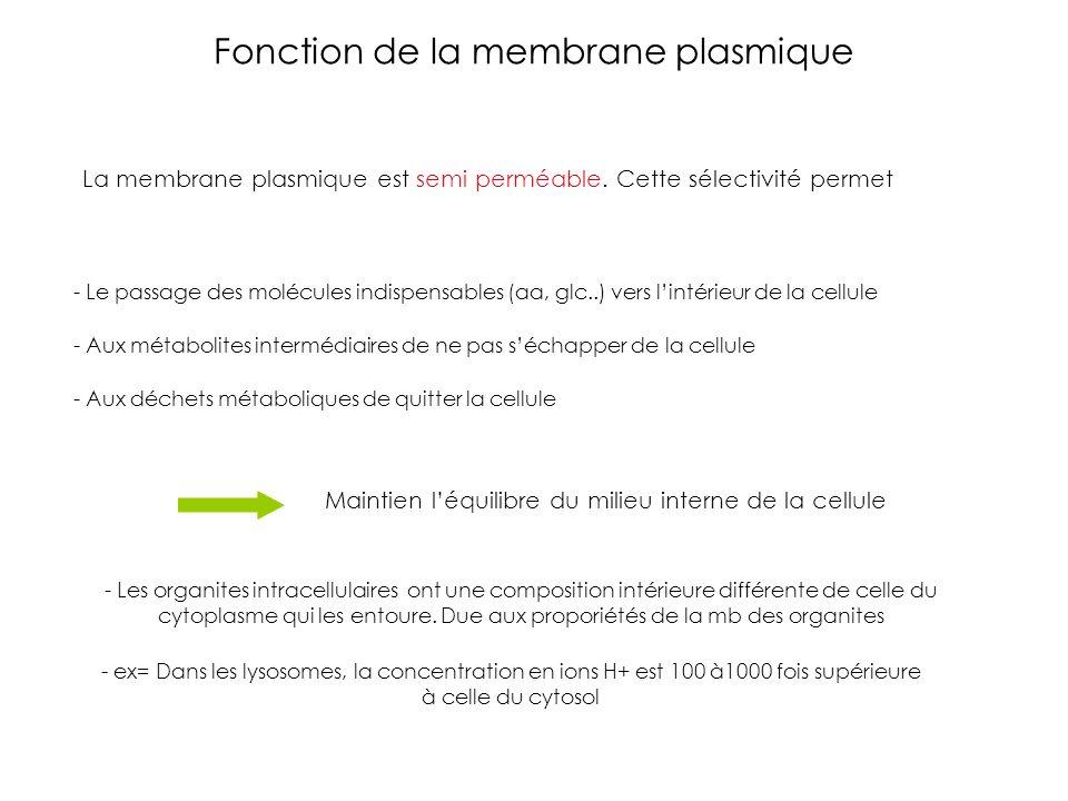 Fonction de la membrane plasmique