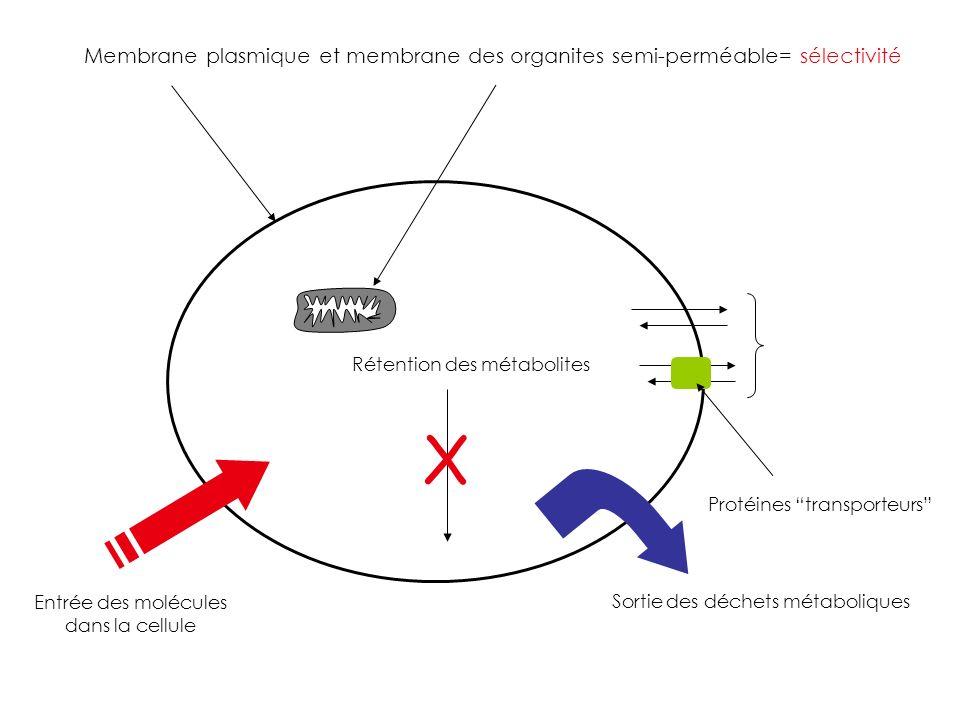 Entrée des molécules dans la cellule