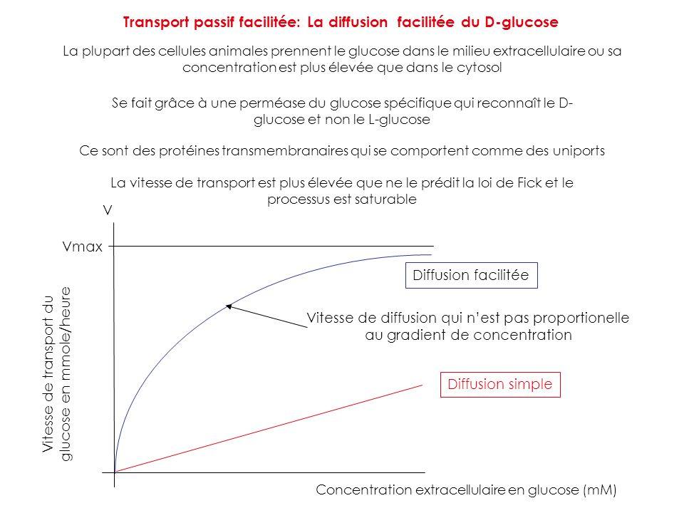Transport passif facilitée: La diffusion facilitée du D-glucose