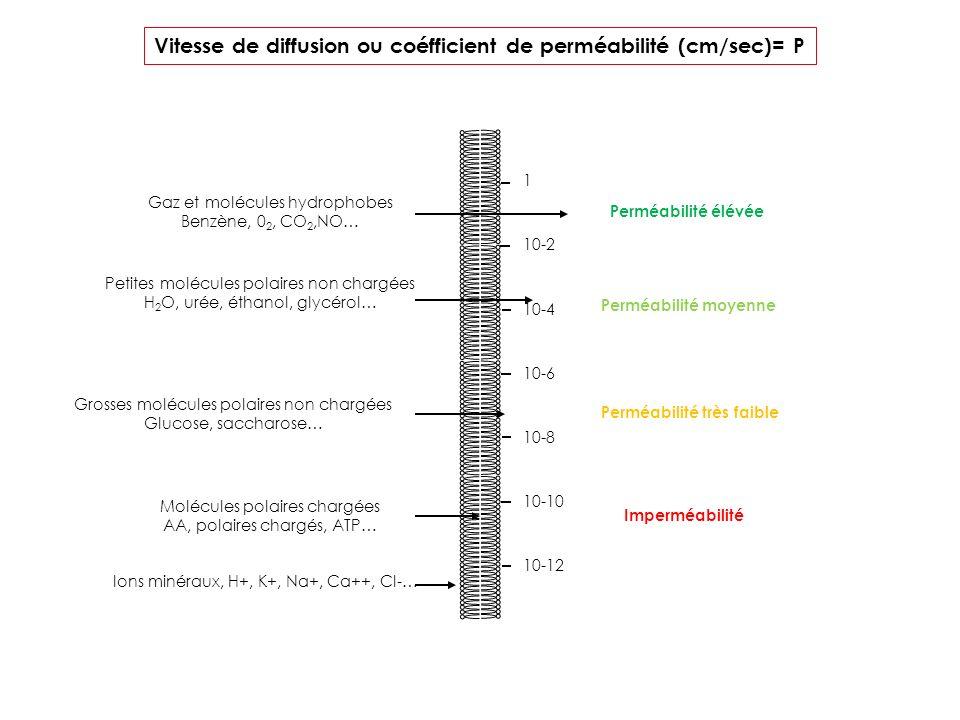 Vitesse de diffusion ou coéfficient de perméabilité (cm/sec)= P