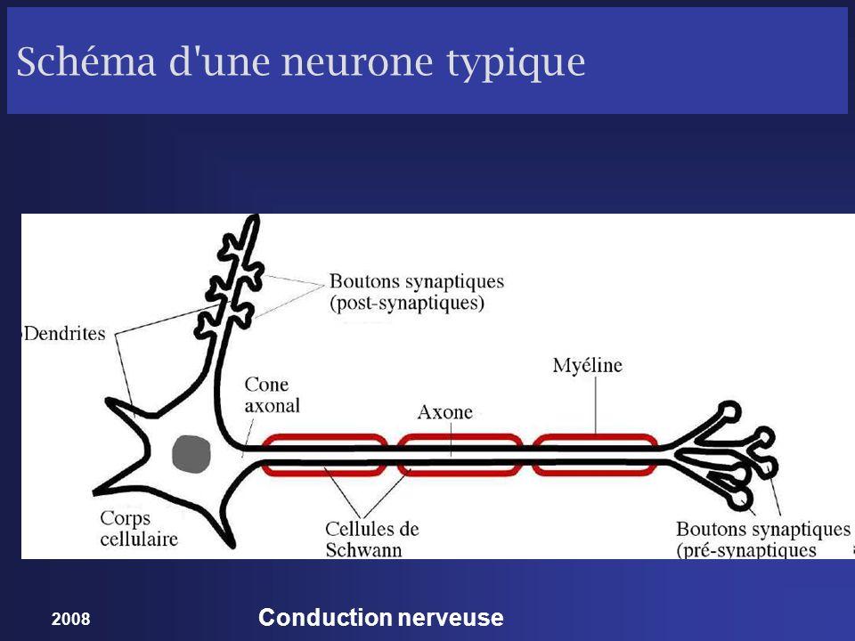 Schéma d une neurone typique