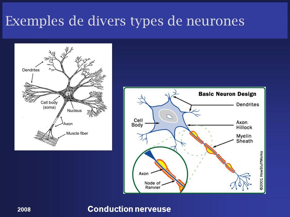 Exemples de divers types de neurones