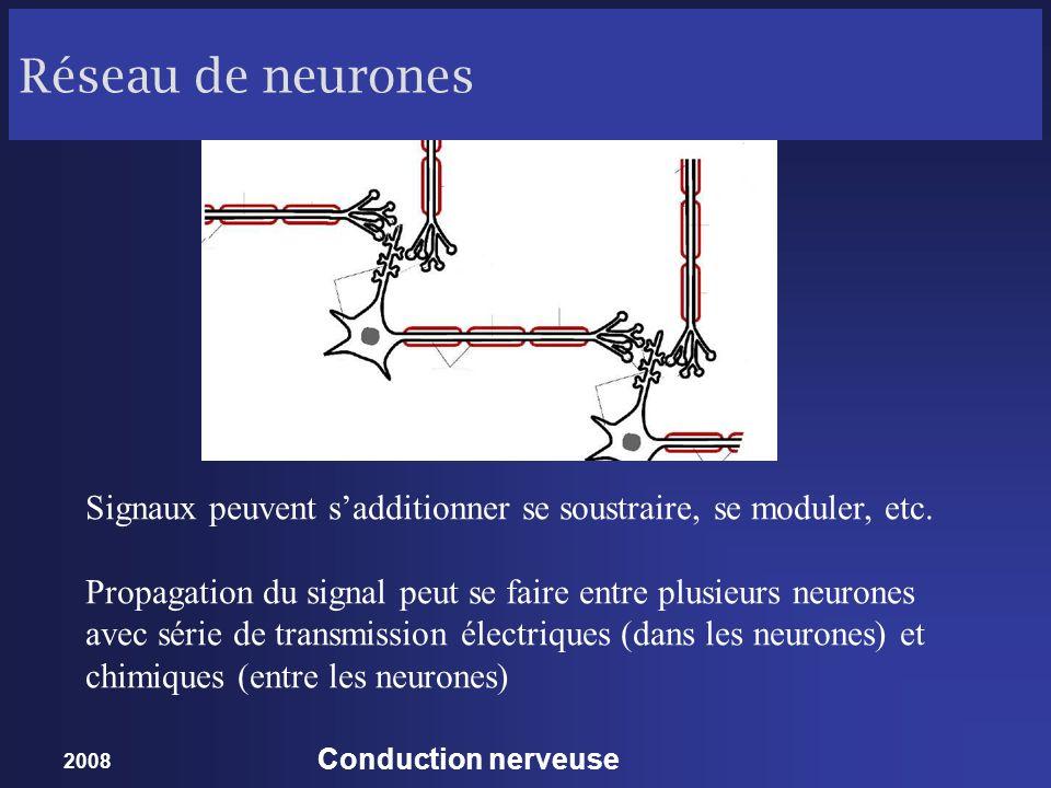 Réseau de neurones Signaux peuvent s'additionner se soustraire, se moduler, etc.