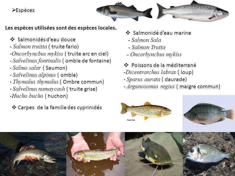 Espèces Les espèces utilisées sont des espèces locales. Salmonidé d'eau marine. - Salmon Sala. - Salmon Trutta.