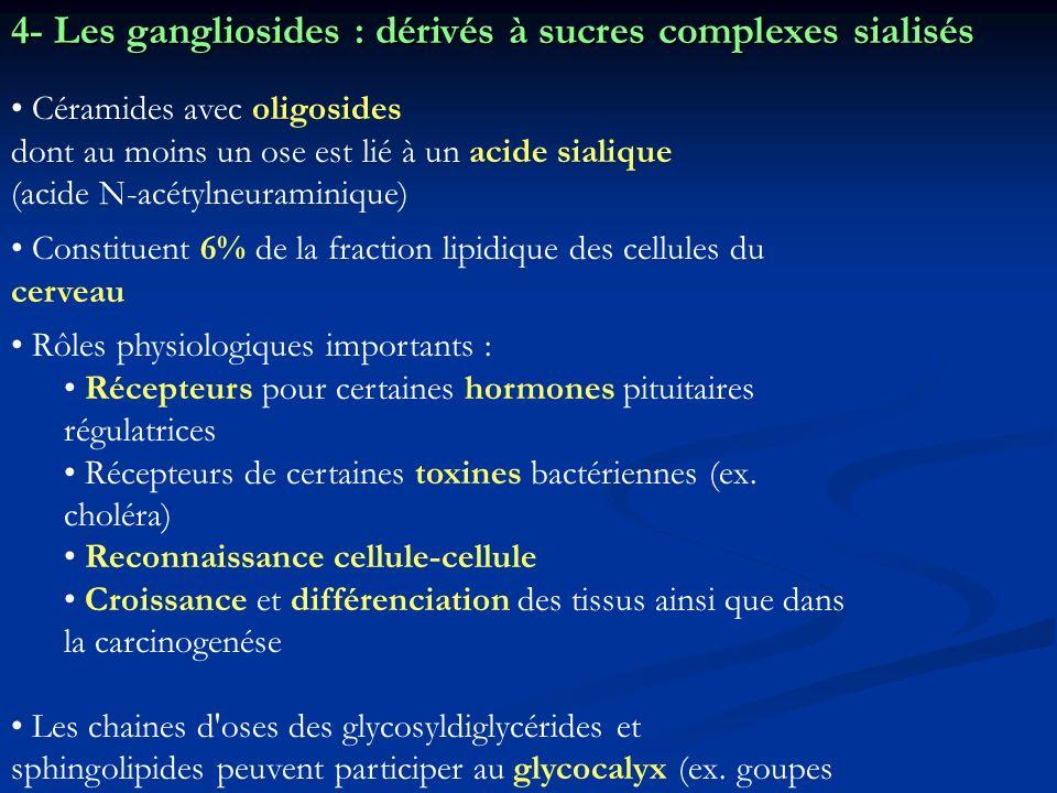 4- Les gangliosides : dérivés à sucres complexes sialisés