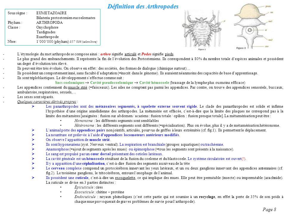 Définition des Arthropodes