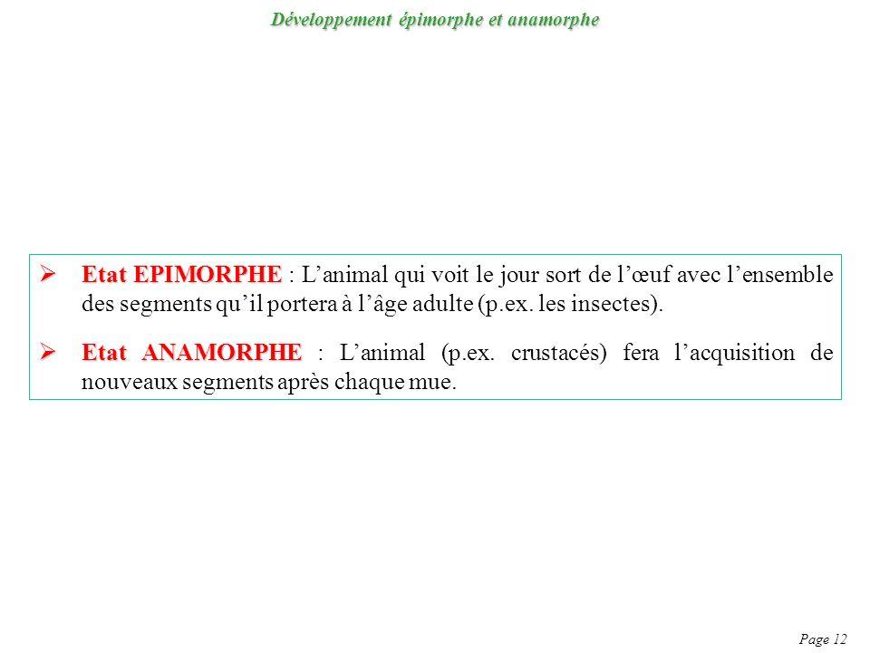 Développement épimorphe et anamorphe