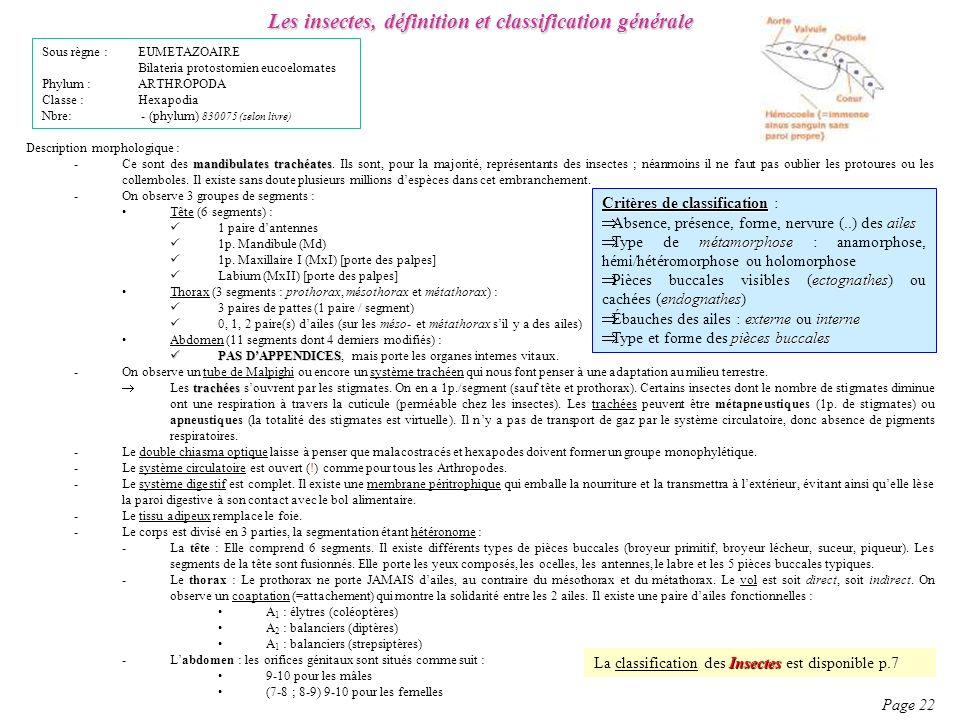 Les insectes, définition et classification générale