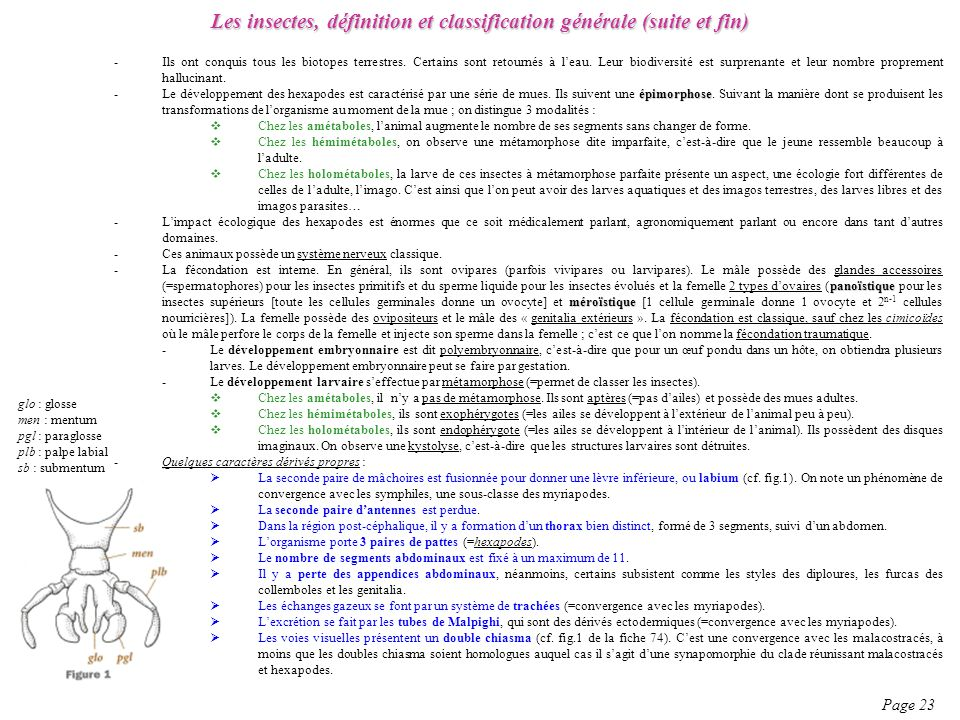 Les insectes, définition et classification générale (suite et fin)
