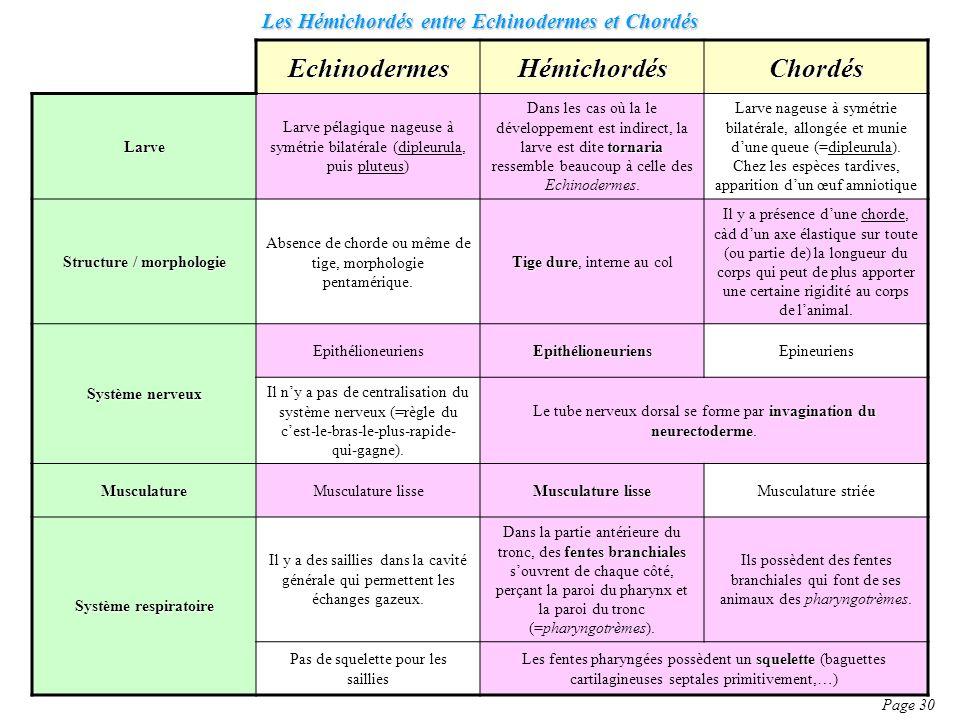 Les Hémichordés entre Echinodermes et Chordés
