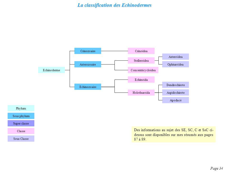 La classification des Echinodermes