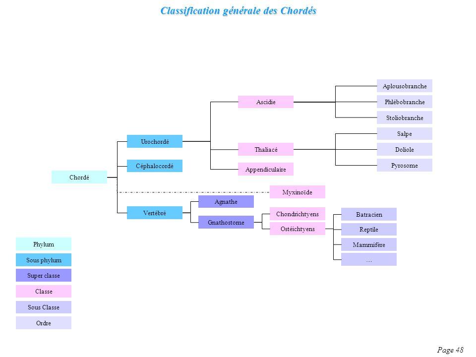 Classification générale des Chordés