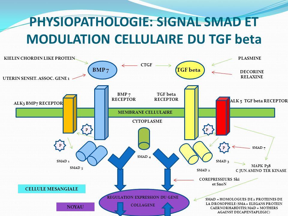 PHYSIOPATHOLOGIE: SIGNAL SMAD ET MODULATION CELLULAIRE DU TGF beta