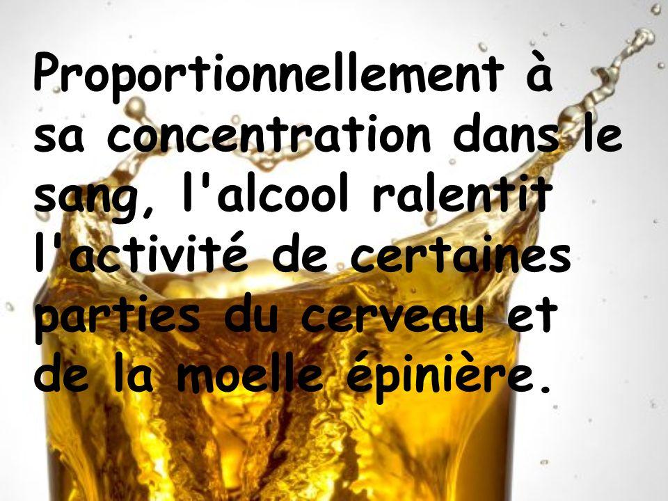 Proportionnellement à sa concentration dans le sang, l alcool ralentit l activité de certaines parties du cerveau et de la moelle épinière.
