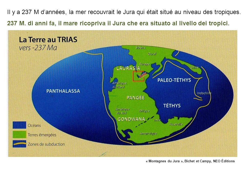 Il y a 237 M d'années, la mer recouvrait le Jura qui était situé au niveau des tropiques.