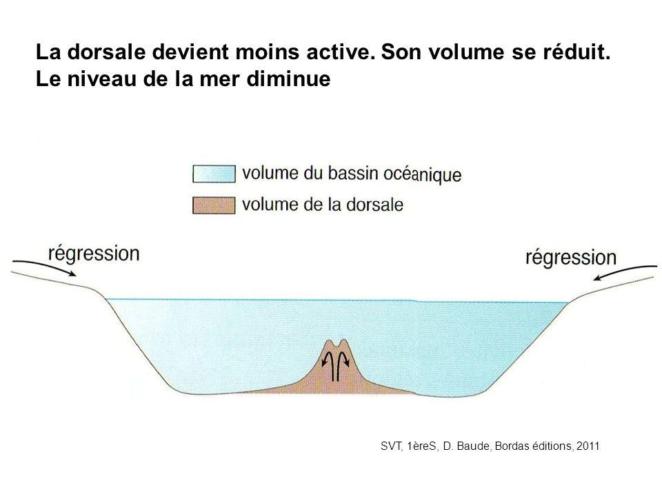 La dorsale devient moins active. Son volume se réduit
