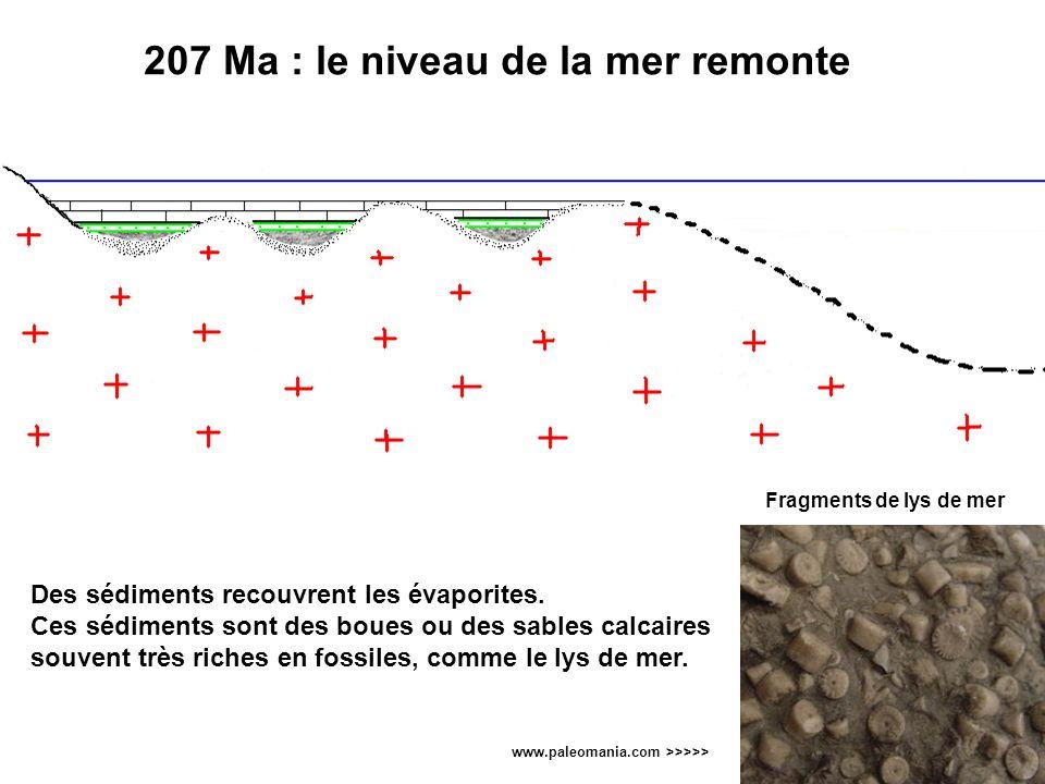 207 Ma : le niveau de la mer remonte