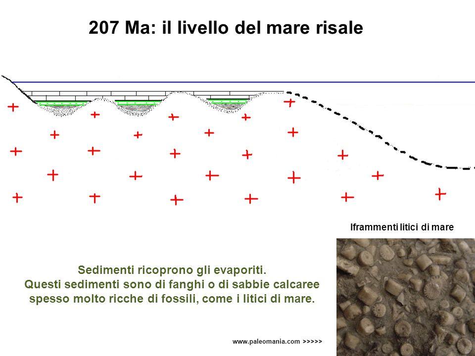 207 Ma: il livello del mare risale