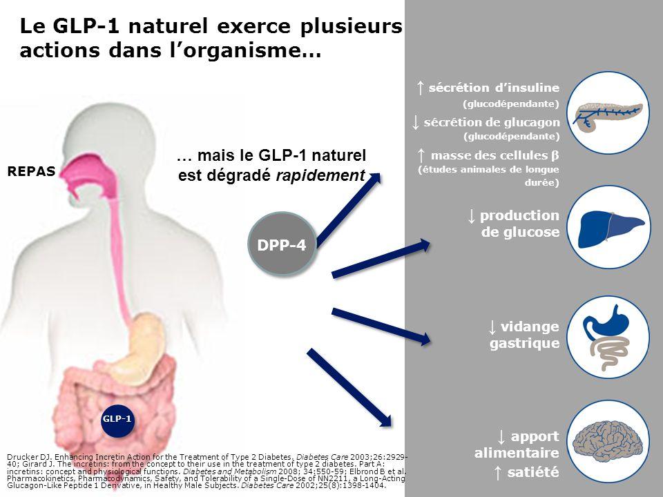 … mais le GLP-1 naturel est dégradé rapidement
