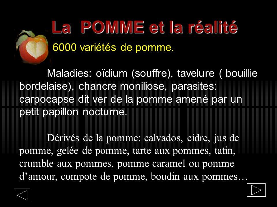 La POMME et la réalité 6000 variétés de pomme.