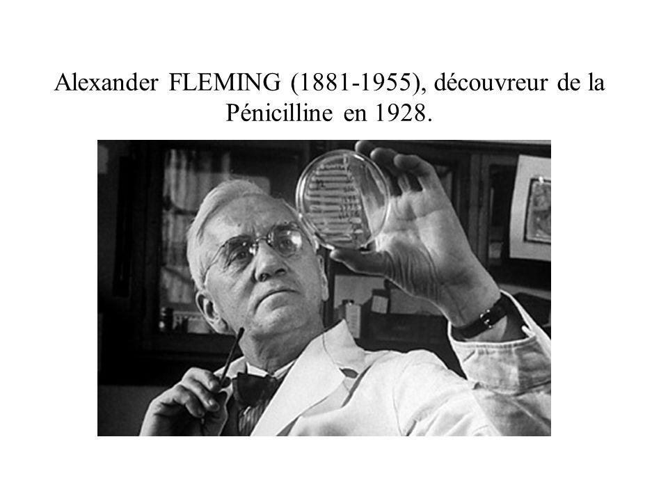 Alexander FLEMING (1881-1955), découvreur de la Pénicilline en 1928.