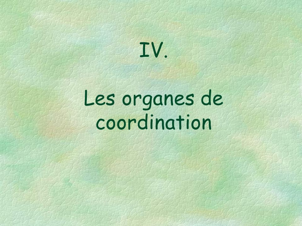 IV. Les organes de coordination