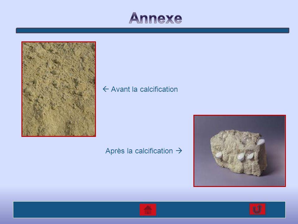 Annexe  Avant la calcification Après la calcification 
