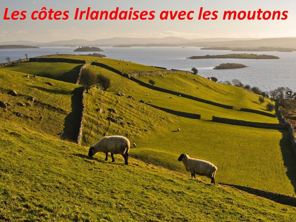 Les côtes Irlandaises avec les moutons