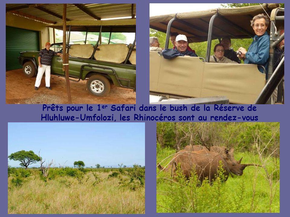 Prêts pour le 1er Safari dans le bush de la Réserve de Hluhluwe-Umfolozi, les Rhinocéros sont au rendez-vous